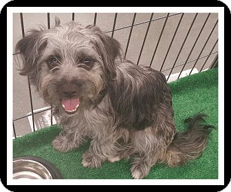 Terrier (Unknown Type, Small) Mix Dog for adoption in Winchester, California - SADIE