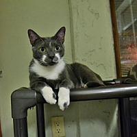 Adopt A Pet :: Calvin - Land O Lakes, FL