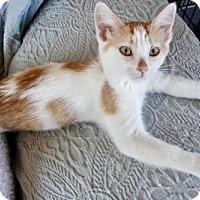 Adopt A Pet :: Aster - Polson, MT