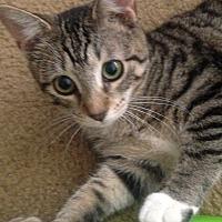 Adopt A Pet :: CHESTNUT - Clayton, NJ