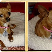 Adopt A Pet :: Mary Jane - Scottsdale, AZ