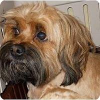 Adopt A Pet :: Miss Mac - dewey, AZ