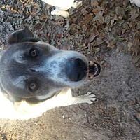 Adopt A Pet :: Pickles - Ardmore, OK