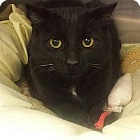 Adopt A Pet :: Nova - Pittstown, NJ