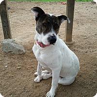 Adopt A Pet :: JOILEE - San Diego, CA