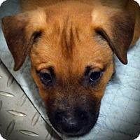 Adopt A Pet :: Cash - Burleson, TX