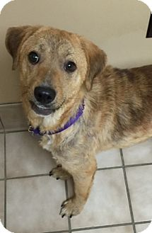 Golden Retriever Mix Dog for adoption in Danbury, Connecticut - Olivia