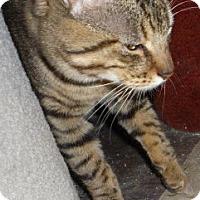 Adopt A Pet :: Little Boy - Dallas, TX