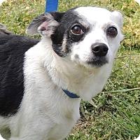 Adopt A Pet :: Jenkins - Joplin, MO