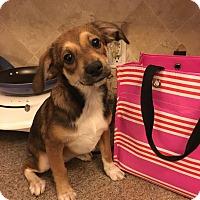 Adopt A Pet :: Gia - Richmond, VA