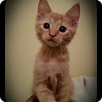 Adopt A Pet :: OB - Richmond, VA
