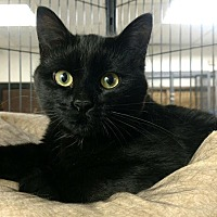 Adopt A Pet :: Louie - Saginaw, MI