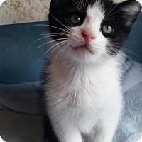 Adopt A Pet :: Licorice - Budd Lake, NJ