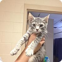 Adopt A Pet :: Petco2  C - Triadelphia, WV