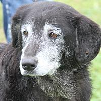 Adopt A Pet :: Aunt Bea - Marietta, OH