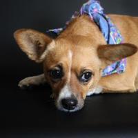 Adopt A Pet :: Honeydew - Yucaipa, CA