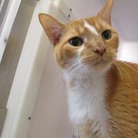 Adopt A Pet :: Bartholomew 518-17 - Cumming, GA