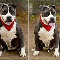 Adopt A Pet :: JANICE - Chatsworth, CA