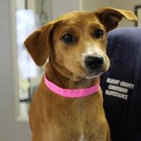 Adopt A Pet :: 36258250 - Cleveland, AL