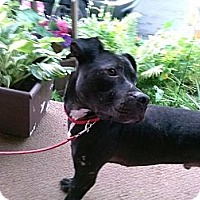 Adopt A Pet :: Victor - Bloomsburg, PA