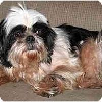 Adopt A Pet :: Snoopy - Mays Landing, NJ