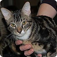 Adopt A Pet :: Indy - Chandler, AZ