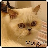 Adopt A Pet :: Morgan - Beverly Hills, CA