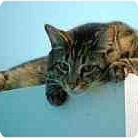 Adopt A Pet :: Caleb - Marietta, GA