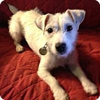 Adopt A Pet :: Libby in Houston Area - Houston, TX