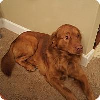 Adopt A Pet :: Donnor - Jacksonville, FL