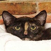 Adopt A Pet :: EVERLY - Alameda, CA