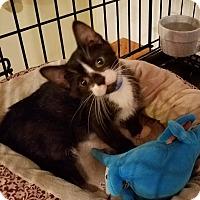 Adopt A Pet :: Jimbo - Geneseo, IL