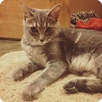 Adopt A Pet :: Alice - Toms River, NJ