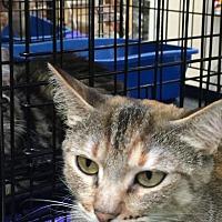 Adopt A Pet :: LUCKY PENNY - Modesto, CA