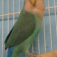 Adopt A Pet :: Tara - Edgerton, WI