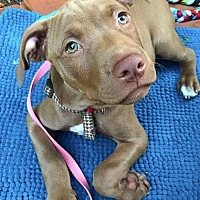 Adopt A Pet :: Chip **NO LONGER ACCEPTING APPLICATIONS** - Minneapolis, MN