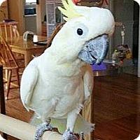 Adopt A Pet :: Sunny - Lenexa, KS
