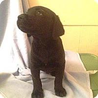 Adopt A Pet :: Sammy - Leesburg, VA