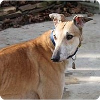 Adopt A Pet :: Hank - Philadelphia, PA