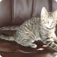 Adopt A Pet :: Nyla - Powell, OH