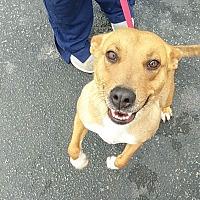 Adopt A Pet :: Annie - Manhasset, NY