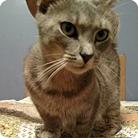 Adopt A Pet :: Ginny - Jacksonville, FL