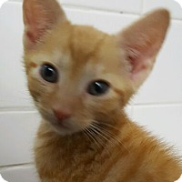 Adopt A Pet :: Gary - Reston, VA
