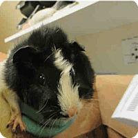 Adopt A Pet :: *Urgent* Penelope - Fullerton, CA