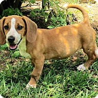 Adopt A Pet :: Madison - Little Rock, AR