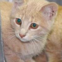 Adopt A Pet :: Coby - Robinson, IL