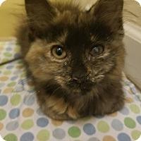 Adopt A Pet :: Jewel - Braidwood, IL
