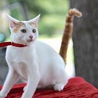 Adopt A Pet :: SIMON - Andover, CT
