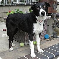 Adopt A Pet :: Dundee - Phelan, CA