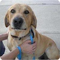 Adopt A Pet :: Louie - Altmonte Springs, FL